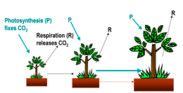 photosynthesis-terre-characterization